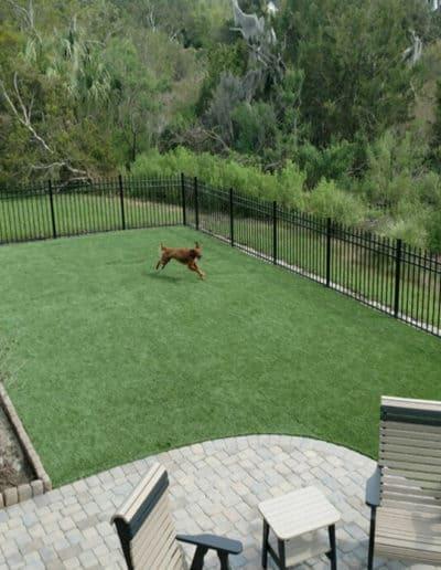 Pet Grass Landscaping